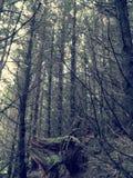 Bosque escocés Foto de archivo libre de regalías