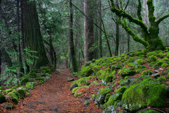 Bosque esmeralda Imagen de archivo