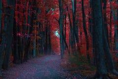 Bosque espeluznante Fotos de archivo libres de regalías