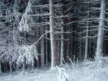 Bosque espeluznante en invierno foto de archivo libre de regalías