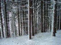 Bosque espeluznante en invierno imagen de archivo