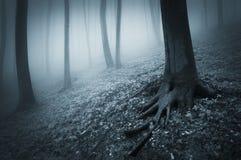 Bosque espeluznante oscuro con niebla y árboles con las raíces grandes Foto de archivo