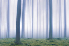 Bosque etéreo fotos de archivo