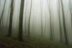 Bosque etéreo con los árboles del canal de la niebla imágenes de archivo libres de regalías