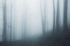 Bosque etéreo surrealista con niebla fotografía de archivo libre de regalías
