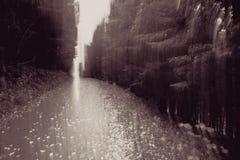 Bosque experimental Fotos de archivo