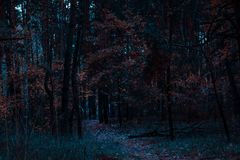 Bosque fantástico de la noche del otoño con las hojas anaranjadas brillantes Imagen de archivo libre de regalías