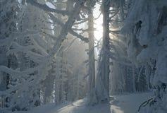 Bosque fantástico del invierno Fotos de archivo libres de regalías