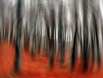 Bosque fantasmagórico fotos de archivo