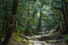Bosque fantasmagórico de víspera de Todos los Santos Foto de archivo libre de regalías