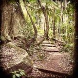 Bosque filtrado Foto de archivo