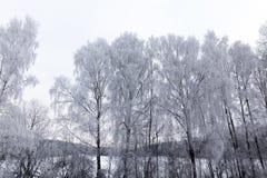 Bosque fotografiado del invierno Foto de archivo