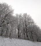 Bosque fotografiado del invierno Fotografía de archivo libre de regalías