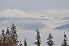 Bosque frío Imágenes de archivo libres de regalías