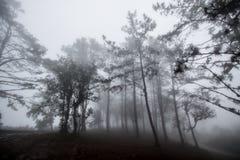 Bosque frío de la naturaleza del paisaje con la niebla, niebla en el aire parque nacional del tiempo del invierno en la montaña imagenes de archivo