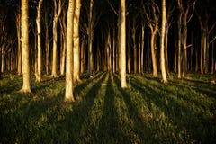 Bosque frecuentado Foto de archivo