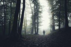Bosque frecuentado Imagenes de archivo
