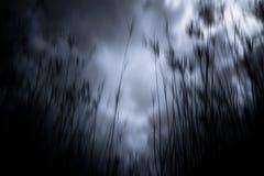 Bosque frecuentado Imagen de archivo