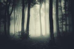 Bosque frecuentado Fotos de archivo libres de regalías