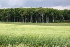 Bosque frecuentado Imágenes de archivo libres de regalías
