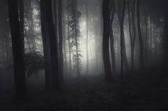 Bosque frecuentado en la noche Fotografía de archivo libre de regalías