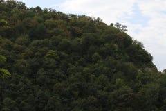Bosque frecuente en la ladera fotos de archivo libres de regalías