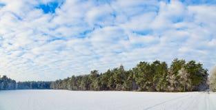 Bosque Frost del invierno en árboles Fotografía de archivo libre de regalías