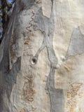 Bosque garabateado foto de archivo