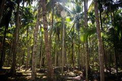 Bosque grosso da palma imagens de stock royalty free