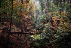 Bosque grueso del otoño en octubre Fotografía de archivo libre de regalías
