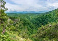 Bosque grueso en un valle verde con las líneas eléctricas La nieve capsuló las montañas visibles en el horizonte foto de archivo libre de regalías