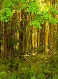 Bosque HDR vertical 1 Imagenes de archivo
