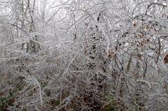 Bosque helado Imagen de archivo