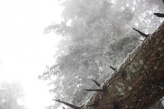 Bosque helado, primer en un tronco Imagenes de archivo