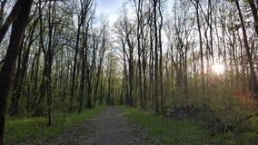 Bosque hermoso Foto de archivo