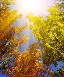 Bosque hermoso Imagenes de archivo