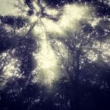 Bosque hermoso Imagen de archivo