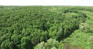 Bosque hermoso almacen de metraje de vídeo