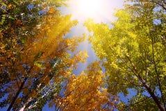 Bosque hermoso Foto de archivo libre de regalías