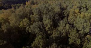 Bosque hermoso aéreo del otoño almacen de video