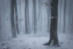Bosque hermoso con nieve y niebla en invierno imagen de archivo