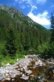 Bosque hermoso de la montaña con el río Imagen de archivo libre de regalías