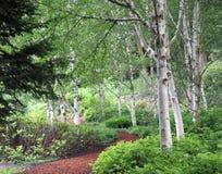 Bosque hermoso del abedul Fotografía de archivo libre de regalías