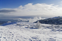 Bosque hermoso del invierno Imagen de archivo libre de regalías