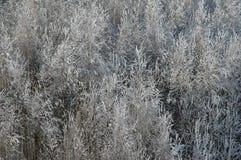 Bosque hermoso del invierno Foto de archivo libre de regalías