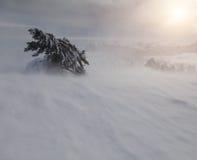Bosque hermoso del invierno Imagenes de archivo