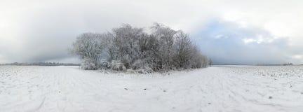 Bosque hermoso del invierno 360 grados de panorama Fotos de archivo libres de regalías