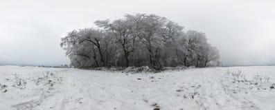 Bosque hermoso del invierno 360 grados de panorama Imagen de archivo libre de regalías