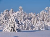Bosque hermoso del invierno - una foto 4 Fotos de archivo libres de regalías