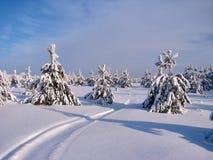 Bosque hermoso del invierno - una foto 2 Imagen de archivo libre de regalías